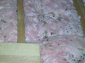 Cellulose insulation removal